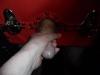 cheshire-mistress-0102v33.jpg